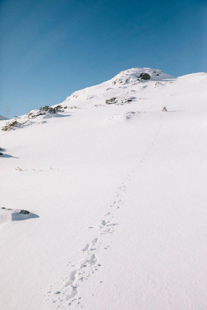 Les traces d'un isard autour du roc du Scaramus en Ariège. crédit photo : Clara Ferrand - blog Wildroad