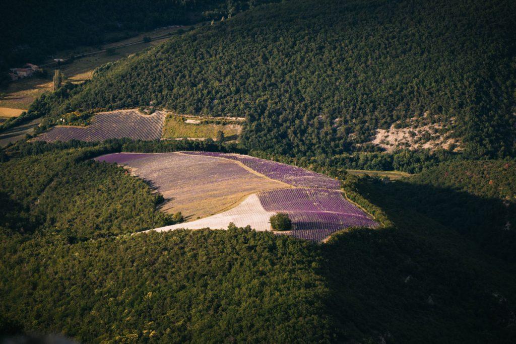 Où acheter son huile essentielle de lavandes ? producteur ou distillerie ? crédit photo : Clara Ferrand - blog WIldroad