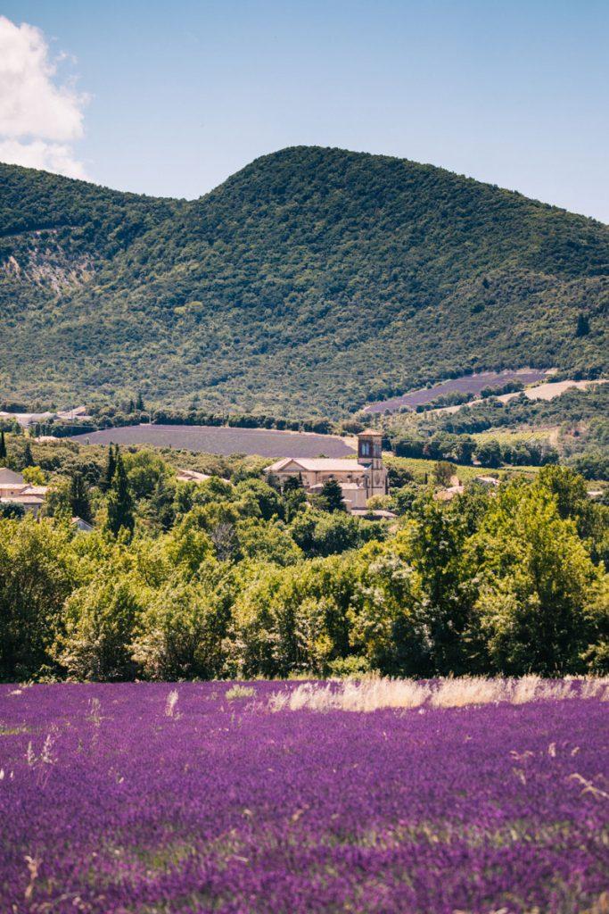 Les champs de lavandes dans les baronnies provençale à la Roche-Saint-Secret Béconne. crédit photo : Clara Ferrand - blog Wildroad