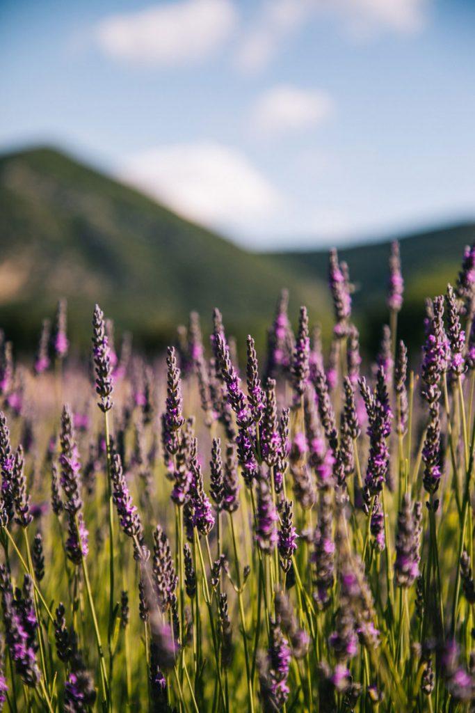 Les randonnée à faire pour voir des champs de Lavandes dans les Baronnies. crédit photo : Clara Ferrand - blog WIldroad