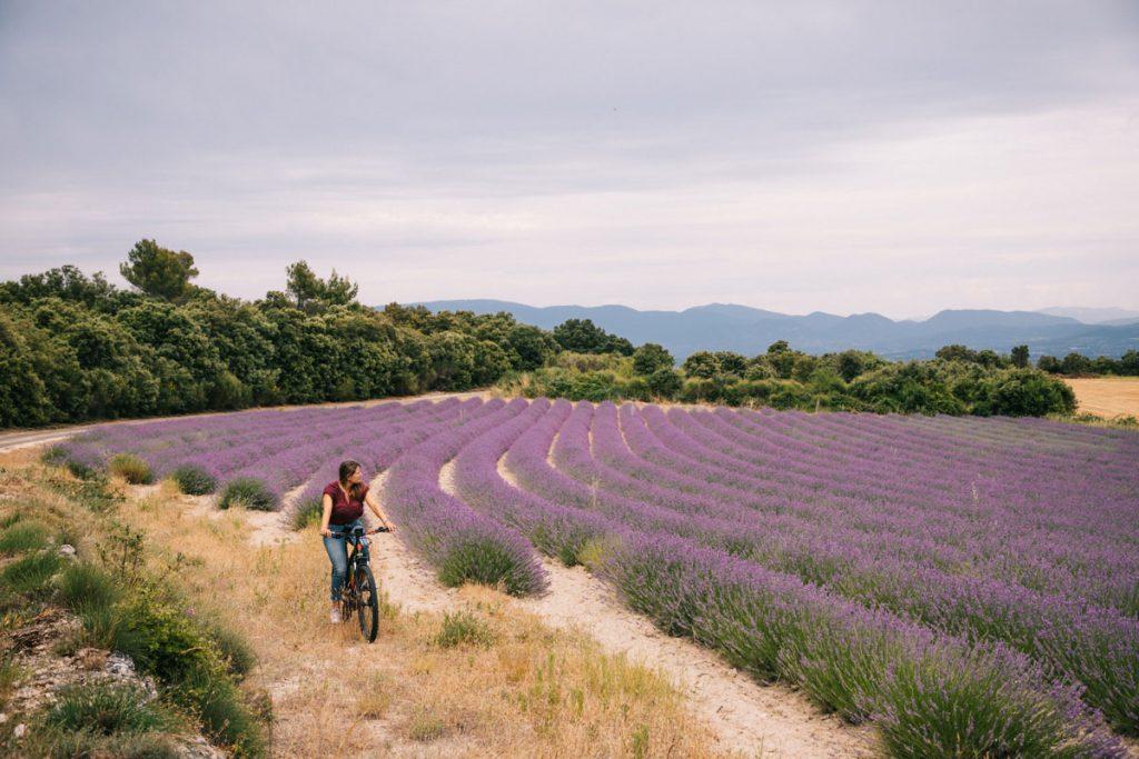Fiare une sortie à vélo dans les champs de lavande  dans la Drôme. crédit photo : Clara Ferrand - blog Wildroad