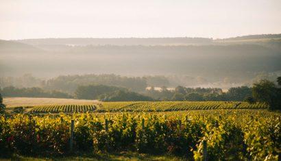 découvrir la côte des Bar et la route du Champagne. crédit photo : Clara Ferrand - blog Wildroad