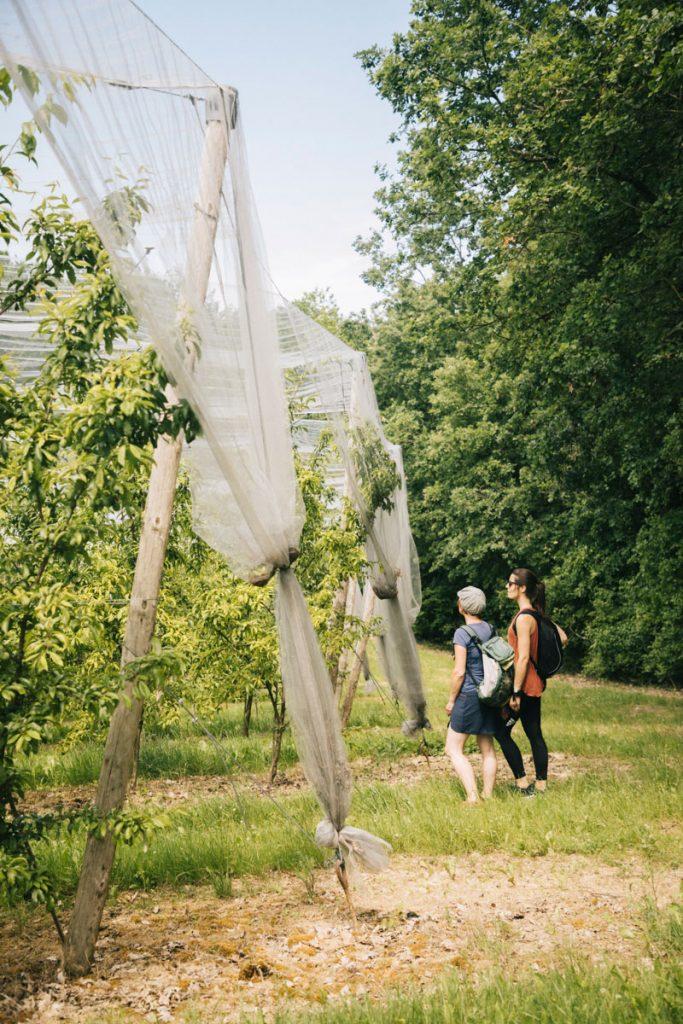 Les vergers ) découvrir lors d cela randonnée des coteaux d'Ardus autour de Montauban. crédit photo : Clara Ferrand - blog Wildroad