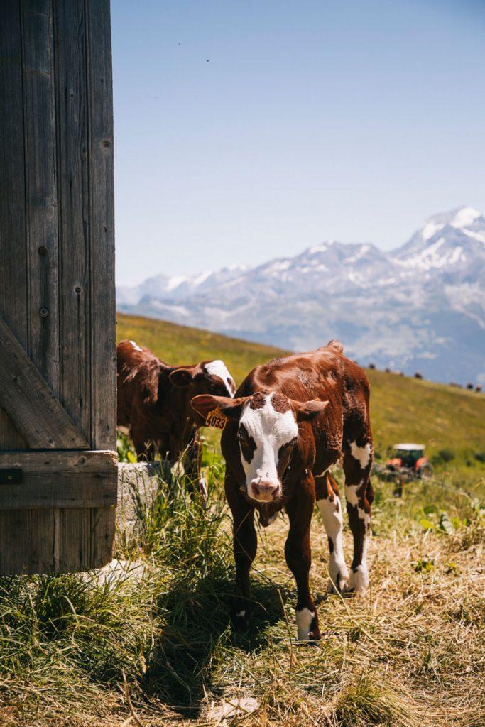 Alpage en savoie avec vue sur le Mont pourri. crédit photo : Clara Ferrand - blog Wildroad