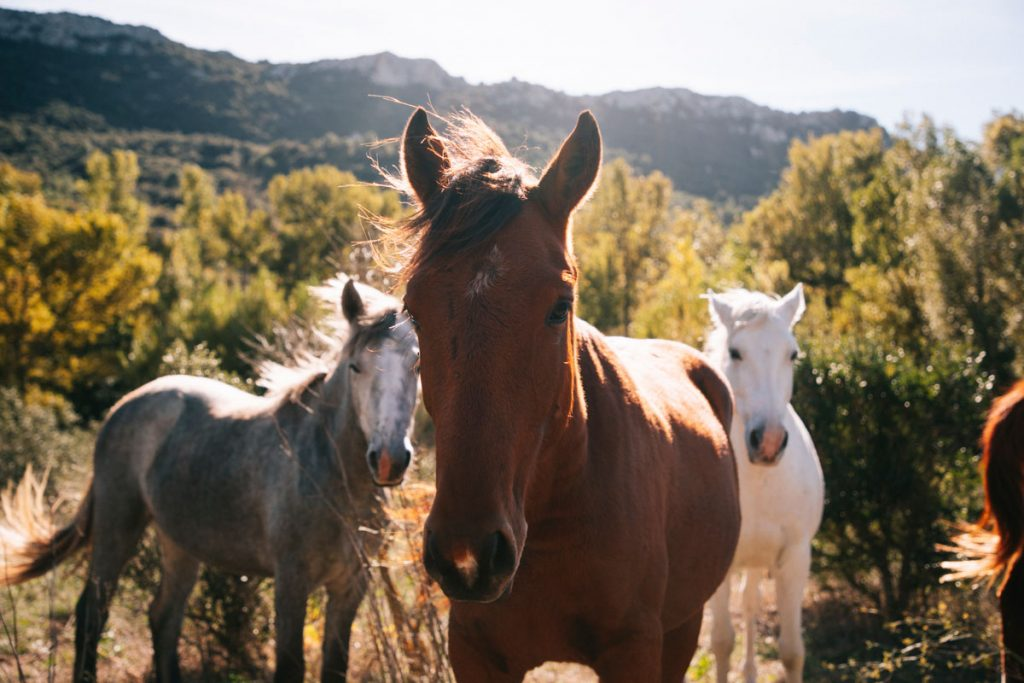 Balade equestre surle sentier Cathare en Occitane. crédit photo : Clara Ferrand - blog Wildroad