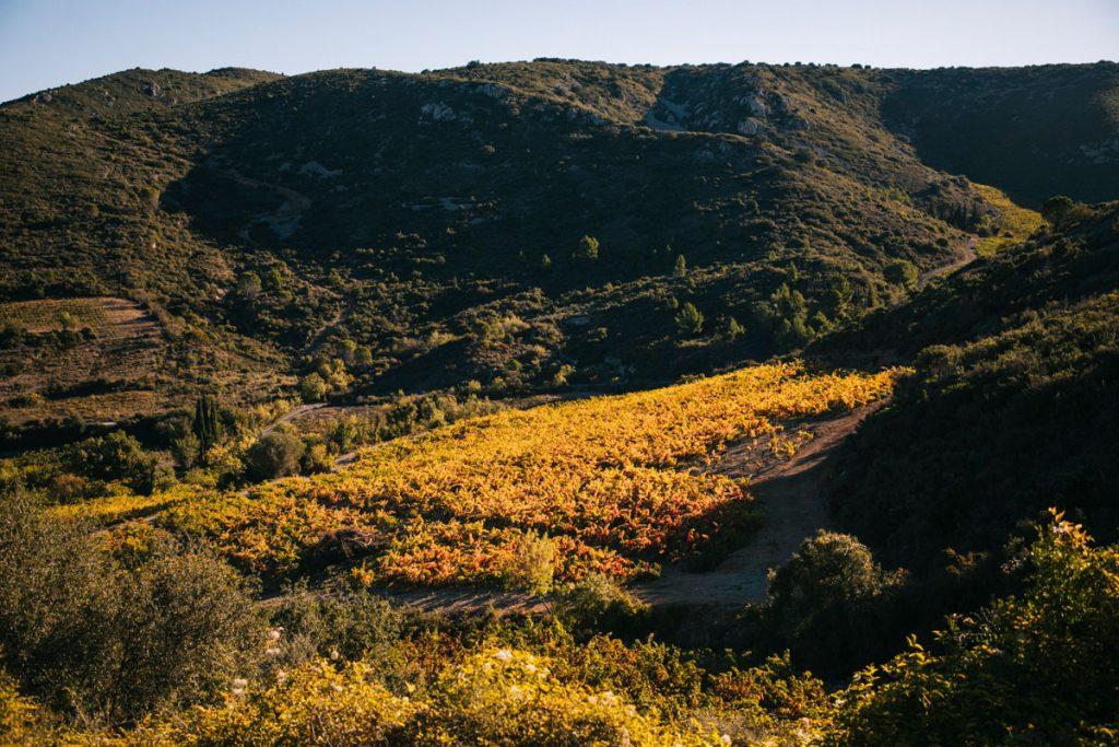 Le vignoble AOC du Fitou dans l'Aude. crédit photo : Clara Ferrand - blog Wildroad