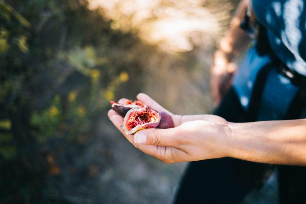 Les figues ramassé lors de ma randonnée dans l'Aude. crédit photo : Clara Ferrand - blog wildroad